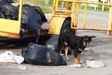 Hund umgeben von Müll