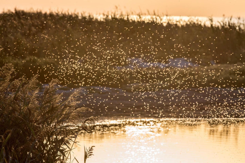 Droht uns 2019 eine Mückenplage?