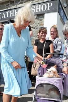 Im Hafenstädtchen Mevagissey lässt Herzogin Camilla bei ihrem Besuch diesen kleinen Hund im Kinderwagen an einer Blume schnuppern.