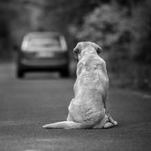 Hund wartet auf seinen verstorbenen Besitzer (Symbolbild)