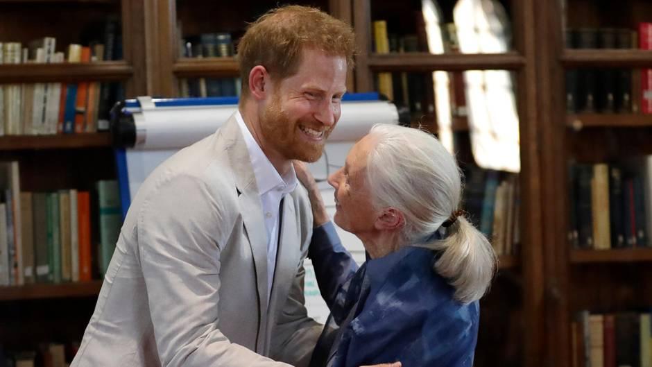 Prinz Harry und Dr. Jane Goodall