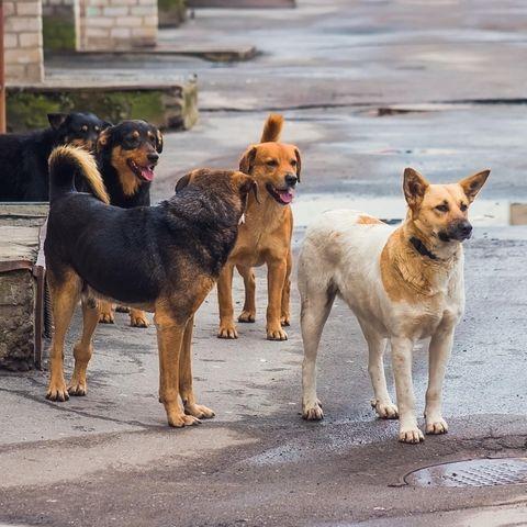 Straßenhunde retten Baby im indischen Kaithal (Symbolbild)