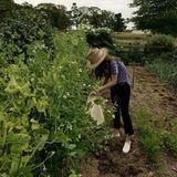 Lily Collins ist ganz in ihrem Element und entspannt sich beim Bohnen ernten im eigenen Garten.