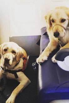 Trudy und Chanel fliegen nach El Paso