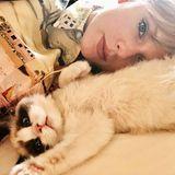 Liebhaber feliner Geschöpfeaufgepasst!  Der 8. August ist der Internationale Tag der Katze, und natürlich gibt es auch jede Menge Stars, die nicht ohne ihr kuscheliges Fellknäuel können, wie z. B. Taylor Swift.