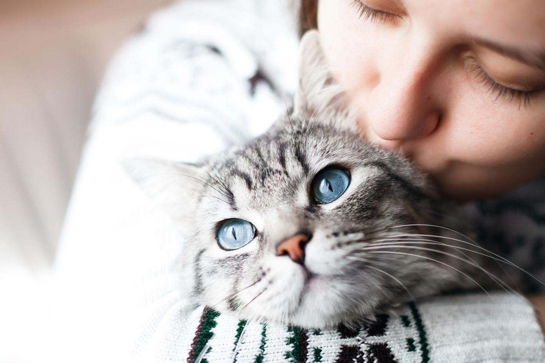 Können Katzenallergiker bald aufatmen?