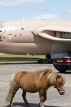 Minipferd vor Flugzeug