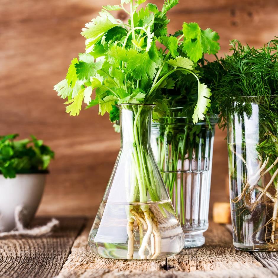 Diese 5 Gemüsereste wachsen endlos wieder nach
