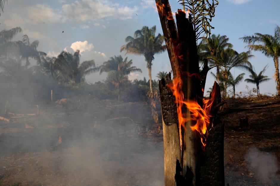Die Amazonas Waldbrände sind verheerend.