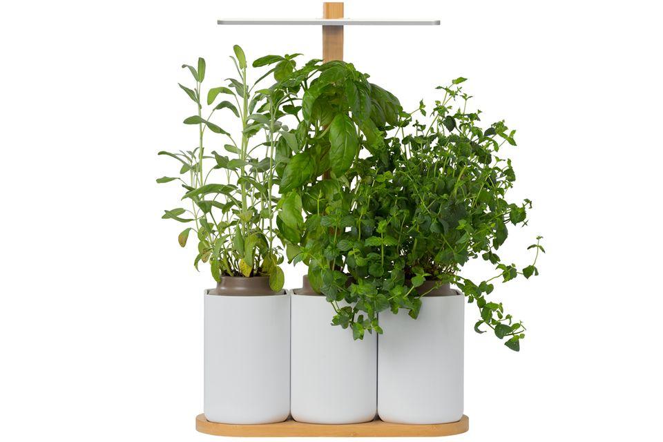 """Indoor-Garten """"Lilo"""" von Prêt à Pousser"""