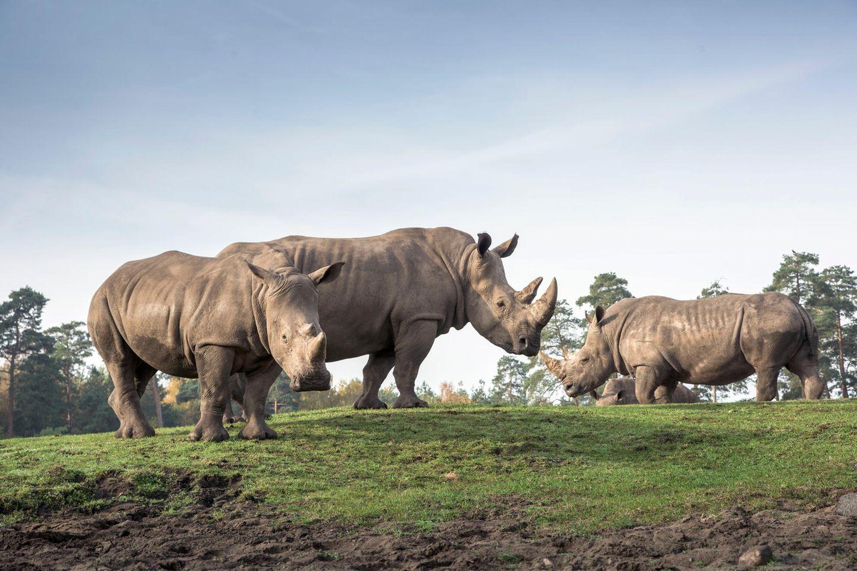 Serengeti-Park Hodenhagenx