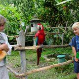 1. Januar 2011  Und auf Bali schwimmt die Prinzessin nicht nur mit Delfinen, sie plaudert auch mit Papageien.