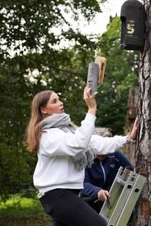 13. September 2019  Und das übernimmt in diesem Jahr Prinzessin Ingrid Alexandra. Fachmännisch inspiziert sie die Brutkästen der nachtaktiven Wildtiere.