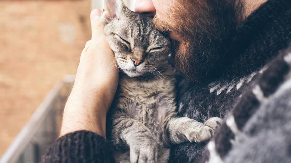 Gesundheitsrisiko Katze: Darum sollte man ihr nicht zu nahe kommen