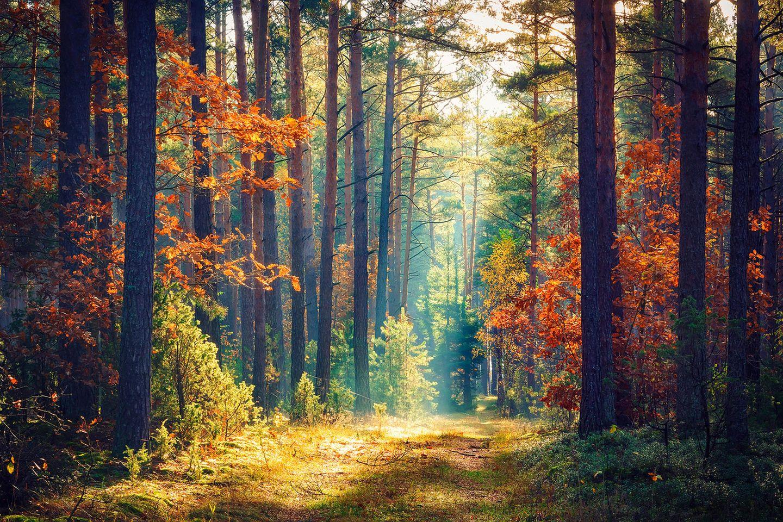 Finden Sie Ihren Lebensbaum nach dem keltischen Baumhoroskop heraus!