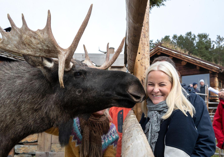 19. September 2019  Von einem Elch geknutscht zu werden, gehört sicherlich zu den besonders schönen Momenten von Prinzessin Mette-Marit.