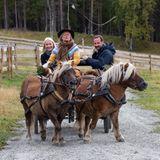 19. September 2019  Kurze Beine, aber eine starke Zugkraft haben die beiden Ponys, die das Kronprinzenpaar in den Wildpark Glittersjå Fjellgård in Oppland kutschieren. Dort werden die beiden auf jede Menge andere Tiere treffen.