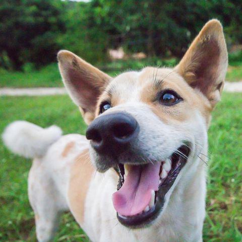 Hunde sind nicht selten die Retter in der Not – so auch bei Anthony (Symbolbild)