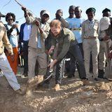 Prinz Harry + Herzogin Meghan: Tag 4 Der vierte Tag der royalen Afrika-Reise beginnt für Prinz Harry mit dem Pflanzen von Bäumen im Chobe Nationalpark in Botswana.