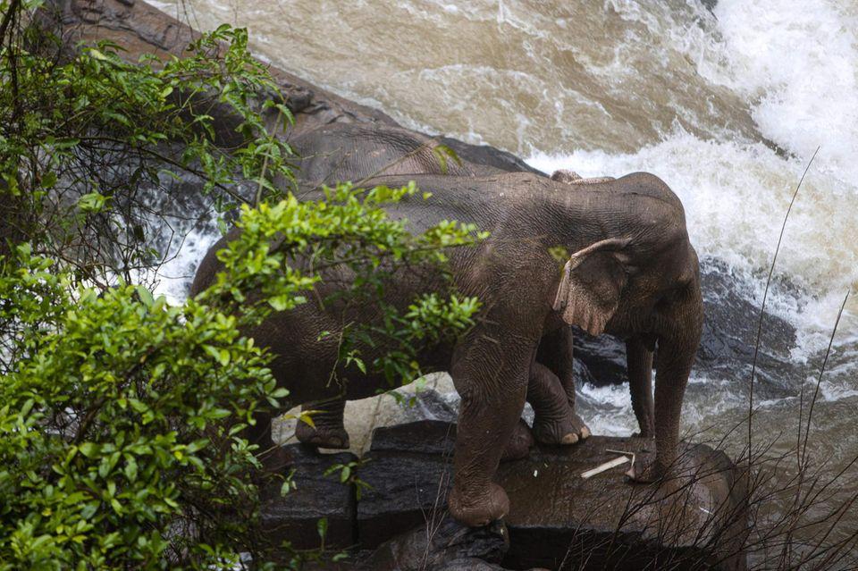 Elefant in Thailand