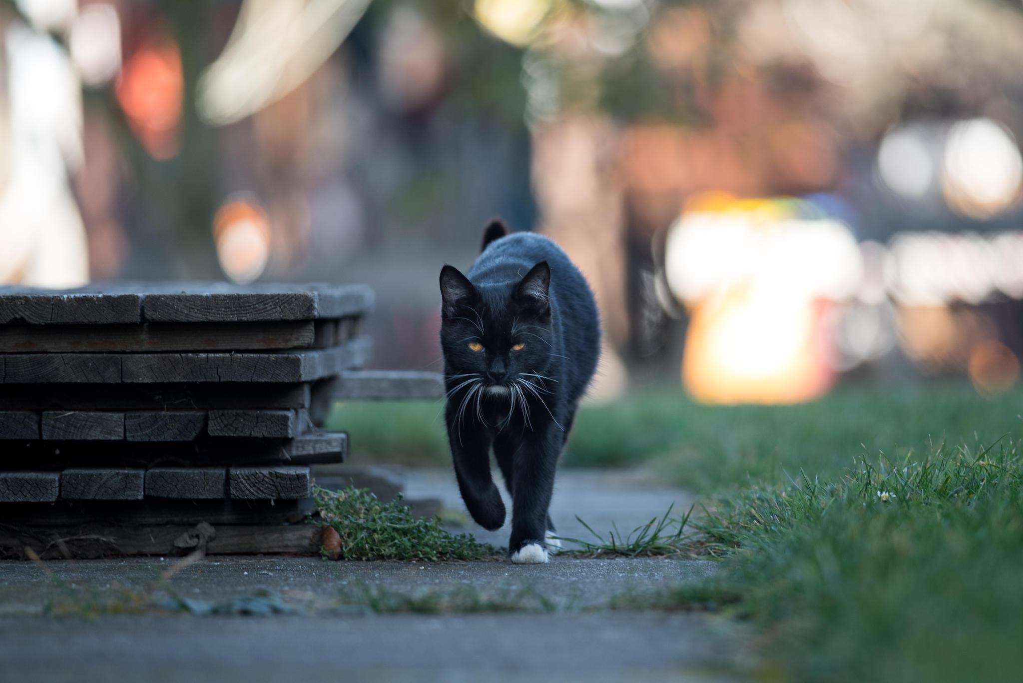 Über sechs Jahre lang war Christines Katze verschwunden (Symbolbild)