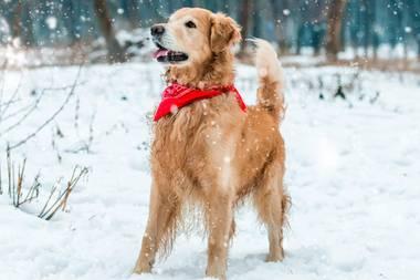 Schnee & Eis: So schützen Sie Ihren Hund im Winter vor Kälte