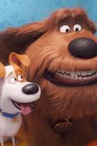 Pets 2 - ab dem 25. Oktober auf DVD und Blu-ray erhältlich