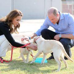 18. Oktober   Tag 5  Der letzte Termin der Pakistan-Reise für Kate und William wird tierisch:Im Army Canine Centre in Islamabad trainieren der Herzog und die Herzogin von Cambridge gemeinsam mit Hundeführern Hunde, dieverborgene Sprengstoffe erkennen und ausfindig machen sollen. Schon die ganz Kleinen werden trainiert.