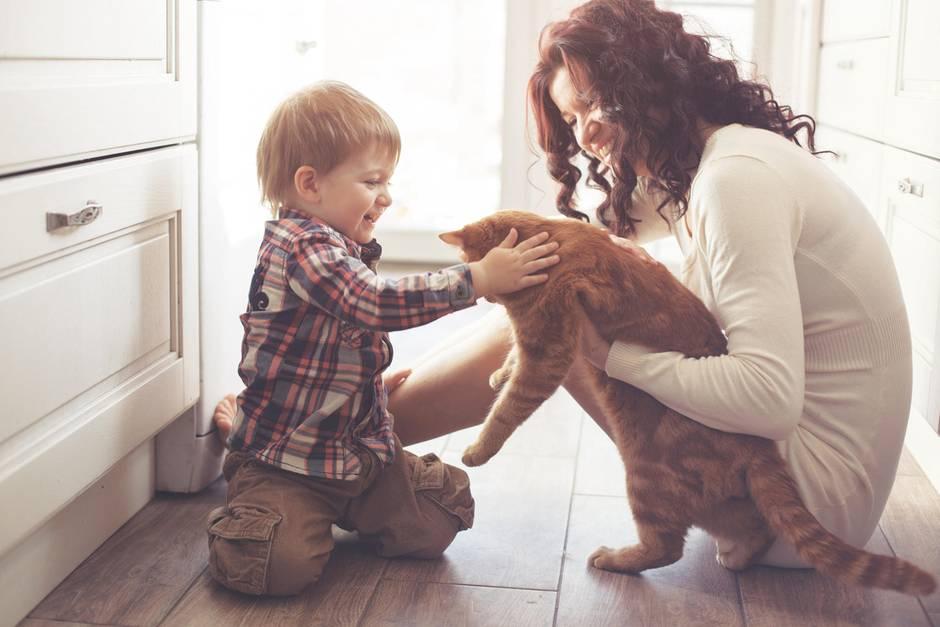 Katzenliebhaber, kleiner Junge mit Mutter und Katze, kleiner Junge streichelt Katze
