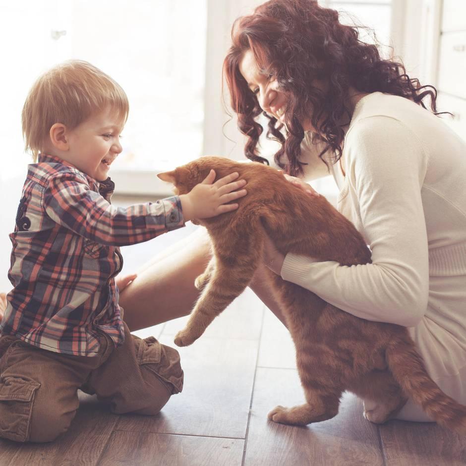 Die schönsten Geschenke für Katzenliebhaber