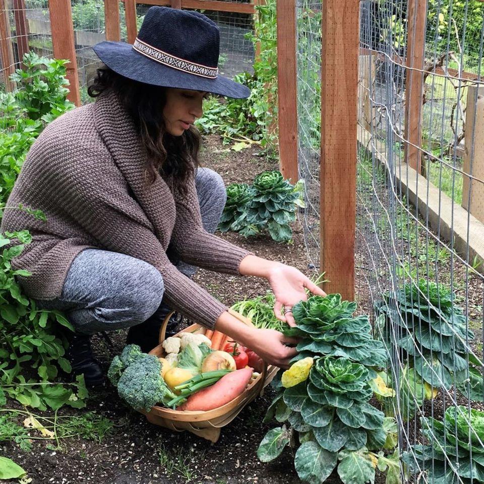 Stolz erntet Camila Alves ihr selbstangebautes Herbstgemüse aus dem heimischen Garten.