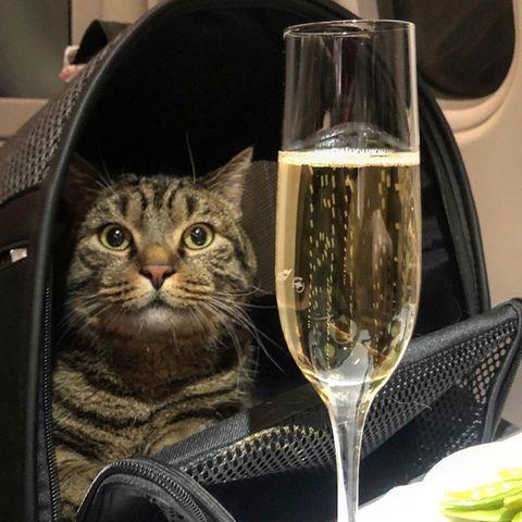 Viktor ist nur durch eine List ins Flugzeug gekommen