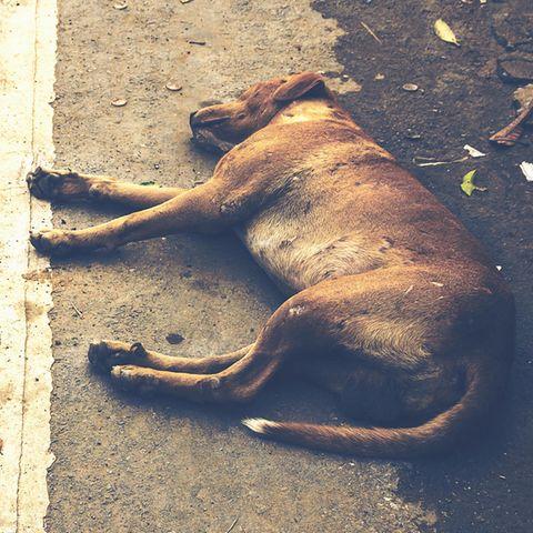 Hund am Straßenrand