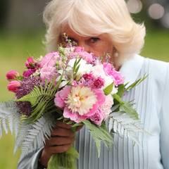 """Prinz Charles + Herzogin Camilla: Den Rest des Tages gehen Camilla und Charles getrennte Wege. Für die Herzogin geht es zunächst zum Botanischen Garten in Christchurch, anschließend stattet sie dem dortigen """"Battersea Women's Trust"""" einen Besuch ab."""