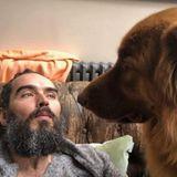 Mit einem guten Kumpel an der der Seite verbringt man den Sonntag noch viel entspannter auf der Couch- so sehenes auch Russell Brand und sein Buddy.