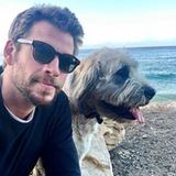 Freundinnen mögen kommen und gehen, aber auf diese treueGefährtinan seiner Seite kann sich Schauspieler Liam Hemsworth voll und ganz verlassen.