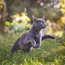 Katzen sollen künftig nicht mehr draußen frei laufen dürfen, so die Forderung niederländischer Juristen
