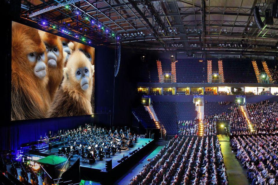 """""""Sieben Kontinente, ein Planet"""" wartet mit einem Live-Orchester auf"""