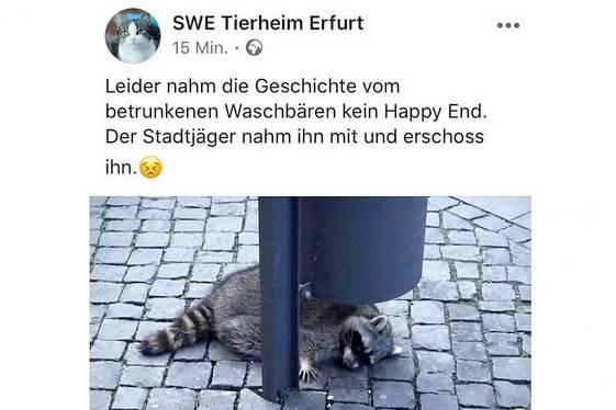 Das Tierheim bestätigt in einem Facebook-Post, dass der Waschbär leider nie dort angekommen sei. Der Beitrag wurde nun gelöscht.