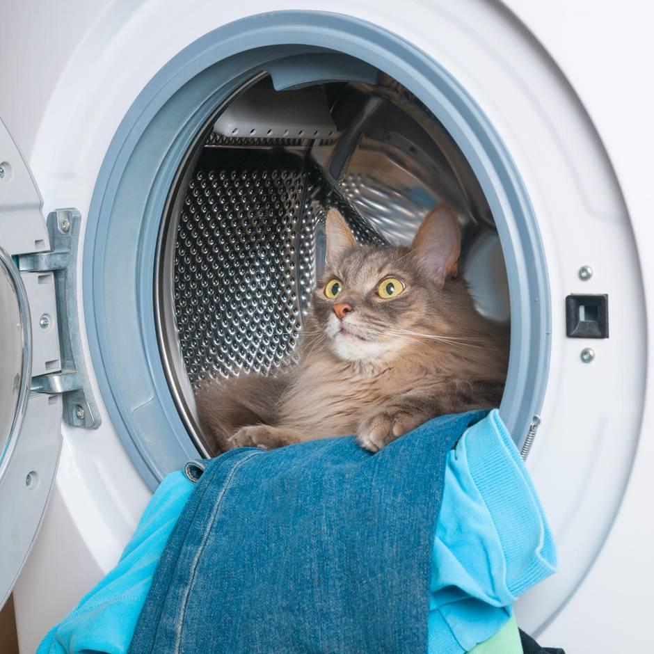 Katze steckt 20 Minuten in Waschmaschine fest