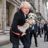 12.Dezember 2019  Um noch ein paar Sympathiepunkte zu sammeln, hatEnglands Premierminister Boris Johnson seinen Jack-Russell-Mischling Dilyn zur Wahlurne mitgebracht. Scheint gewirkt zu haben, seine Partei gewann die Mehrheit.