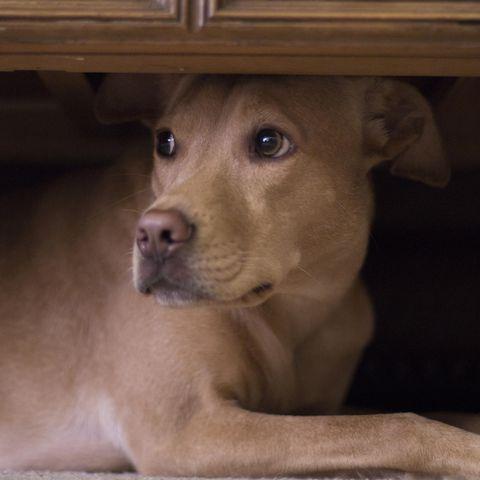 Hund versteckt sich unter Schrank