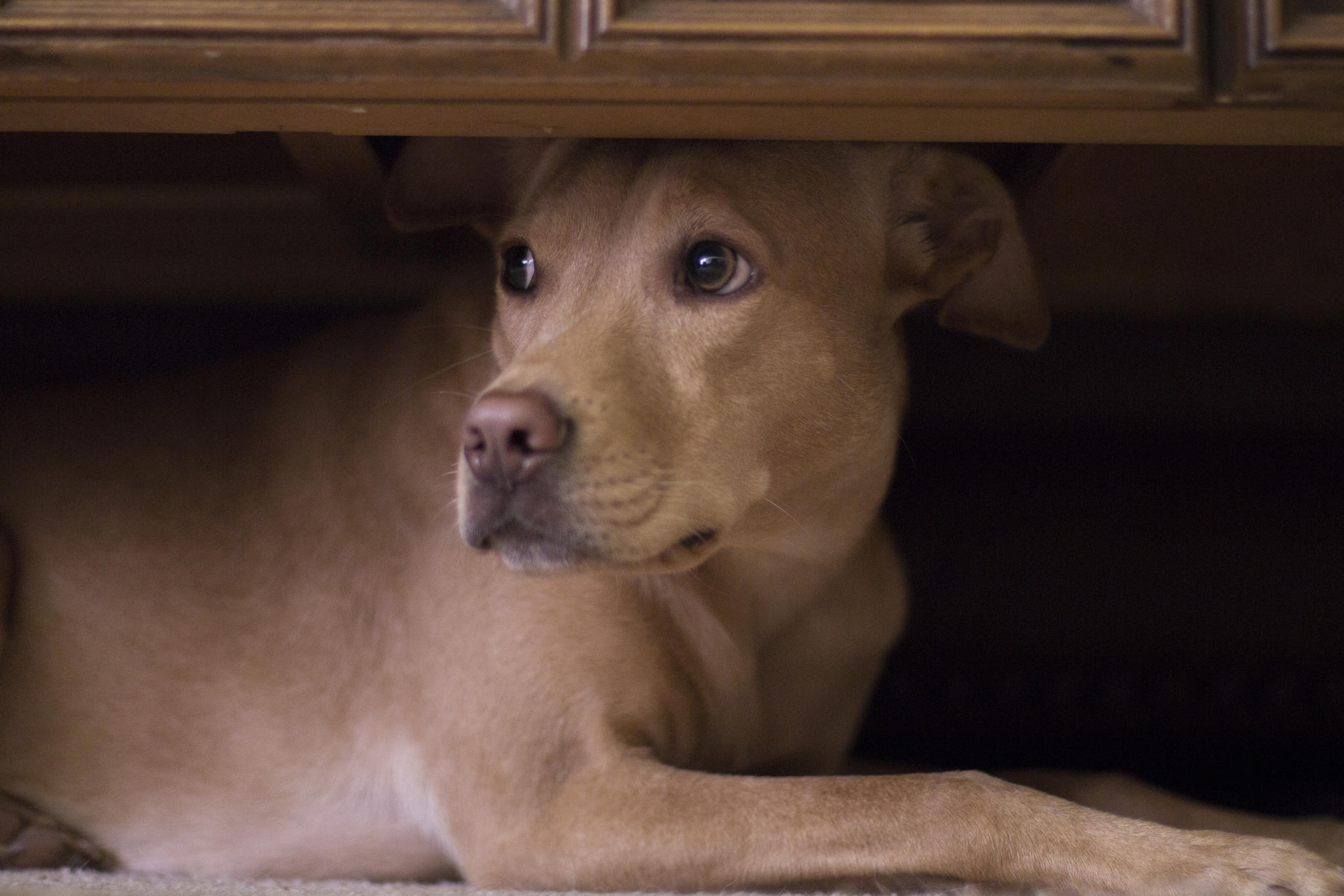 Hund stirbt in den Armen seines Herrchens - Grausame Szene geht viral | Welt