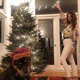 Nicht nur der Weihnachtsbaum von Model Emrata wirdgeschmückt,auch ihr Hund Colombo mussdran glauben. Ob ihm das winterliche Accessoire gefällt?