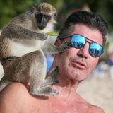 Auf Barbados macht Simon Cowell am Strand Bekanntschaft mit diesem kleinen Affen.
