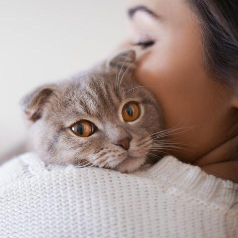 Pets: Das Geheimnis der Haustiere ist gelüftet
