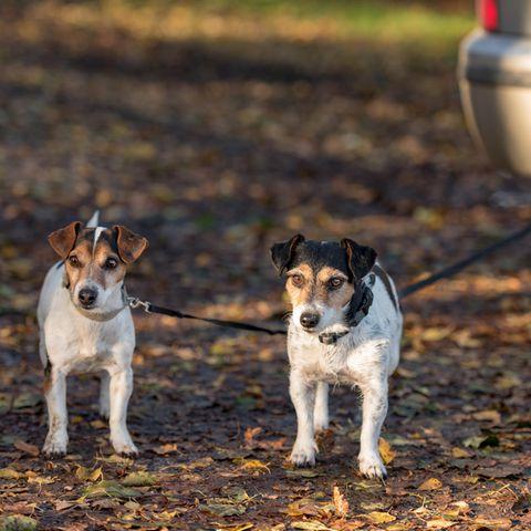 Hunde warten auf ihre Besitzer