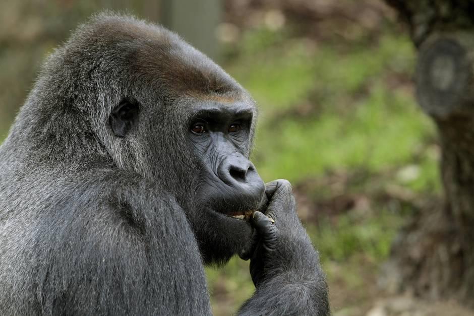Beim Brand im Krefelder Zoo starbenüber 30 Tiere (Symbolbild)