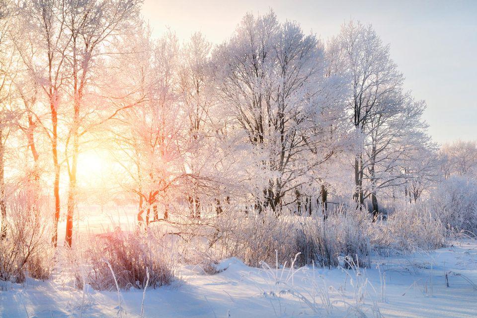 Verschneite Winterlandschaften bekommen wir in diesem Jahr wohl nicht mehr zu sehen
