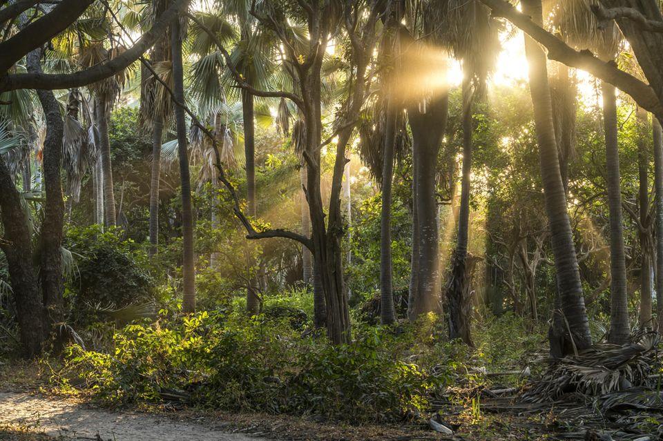 Über einen Monat irrten eine Frau und ihre drei Kinder im Dschungel Kolumbiens umher, dann konnten sie gerettet werden(Symbolbild)